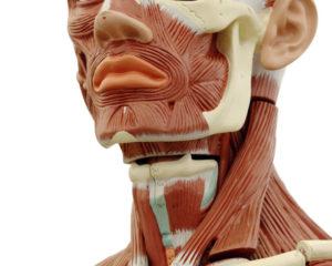 мезонити для подтяжки лица
